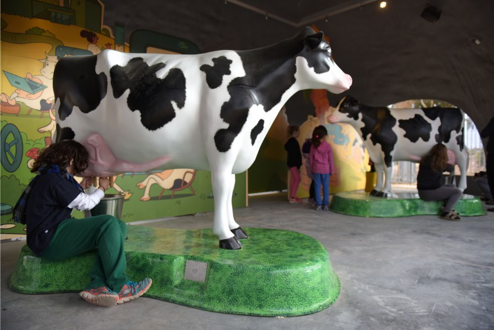 cow06